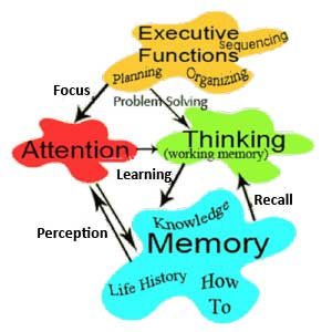 Elements of Cognition